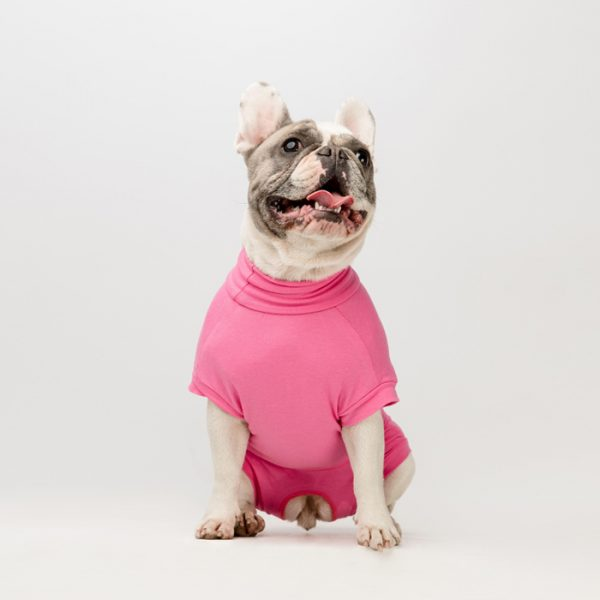 French bulldog wearing the Vethelp full suit, an alternative to the plastic collar.